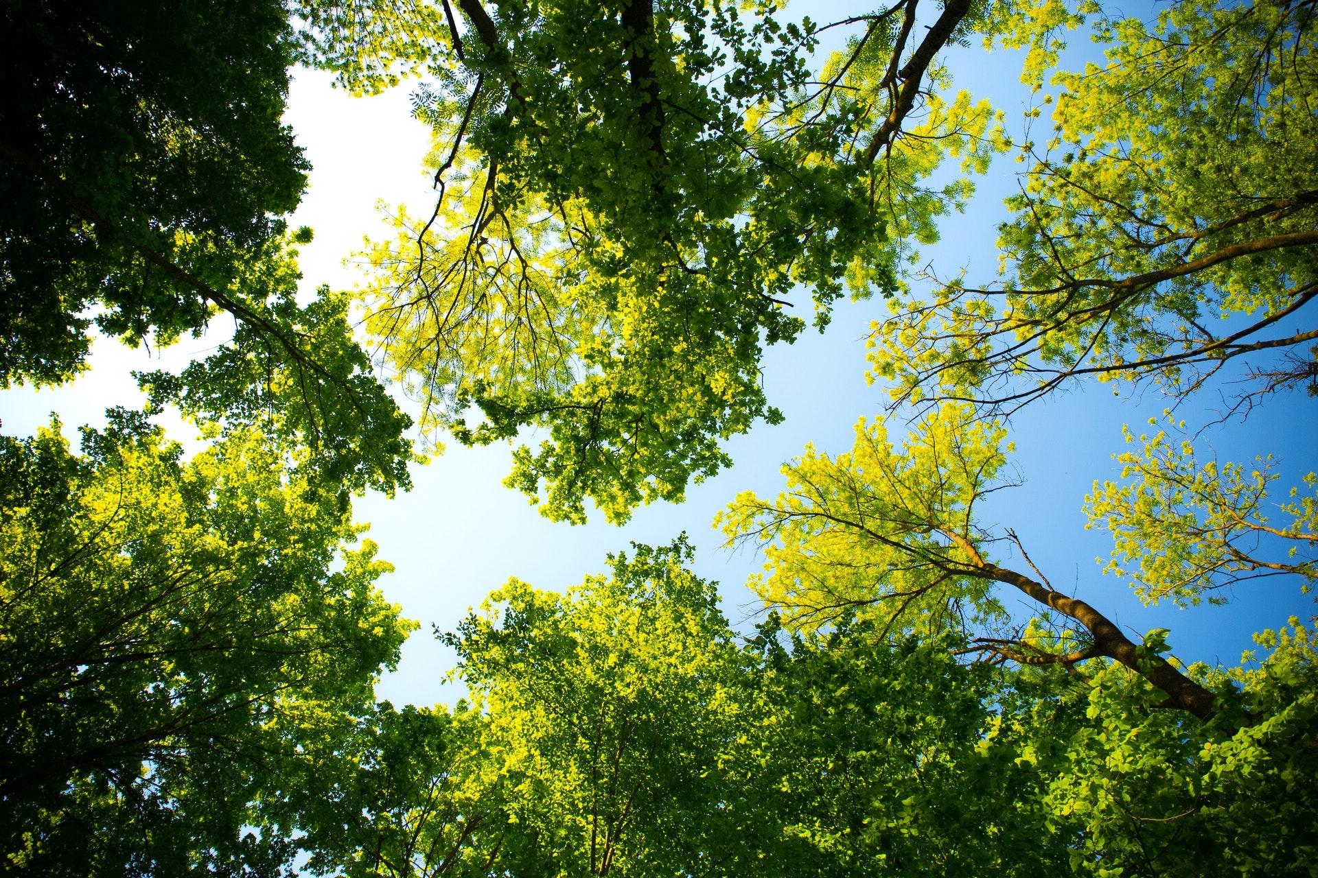 Zielony Żuromin